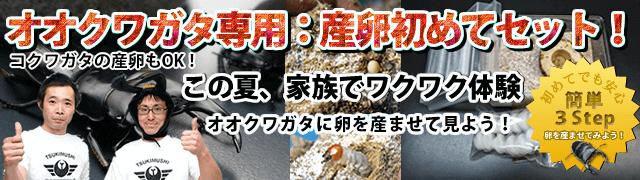 ookuwa-sanran-tsukimushi