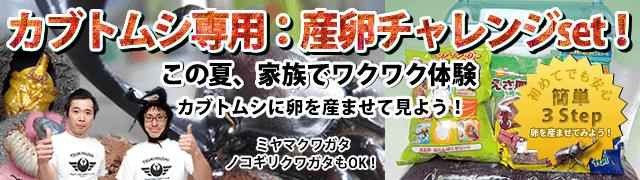 kabuto sanran tsukimushi