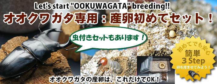 オオクワガタ専用:産卵初めてセット販売中!!