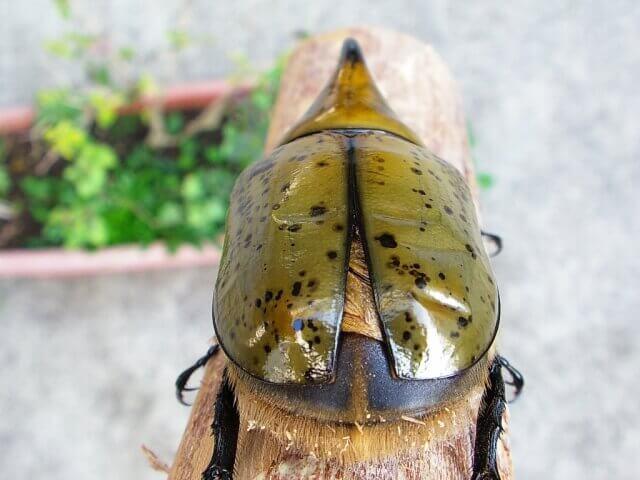 羽パカヒルス2