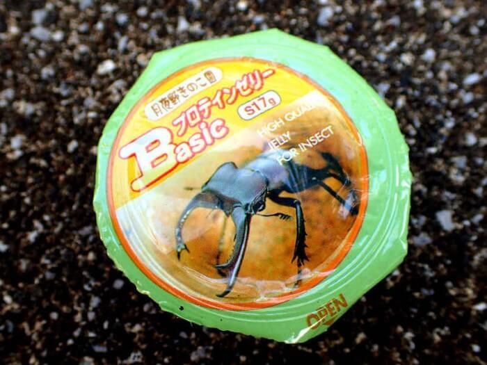 昆虫ゼリー