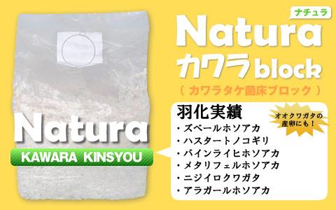 カワラタケ菌床ブロック