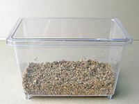 国産カブトムシ成虫飼育、ほだマットをしいたところ