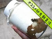 クワガタ菌糸ビン幼虫飼育
