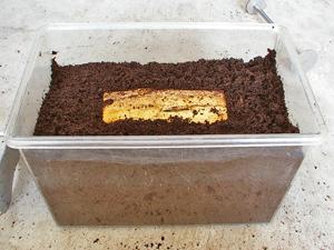 クワガタ産卵木を使った産卵方法